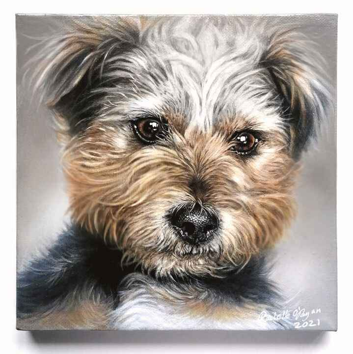 Meet the Gorgeous little Fletcher❤️my latest canine portrait painting, what a cutieNow safe to share.